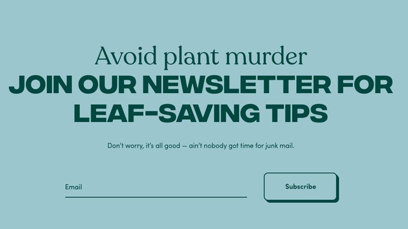 Funny copy about killing houseplants